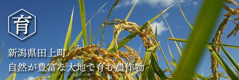 有限会社ライス・イア・コープ/新潟県田上町